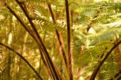 Ferns!